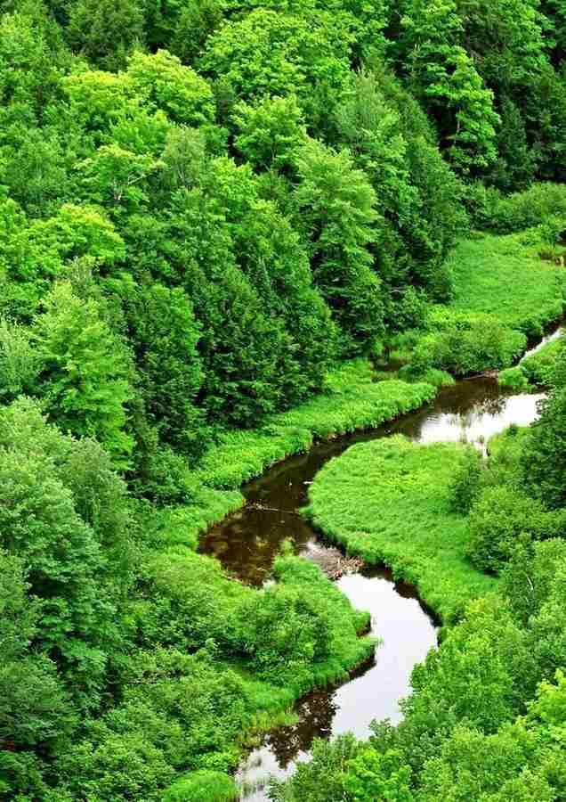Эколог – защитник природы