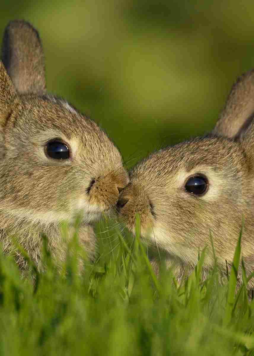 В погоне за двумя зайцами